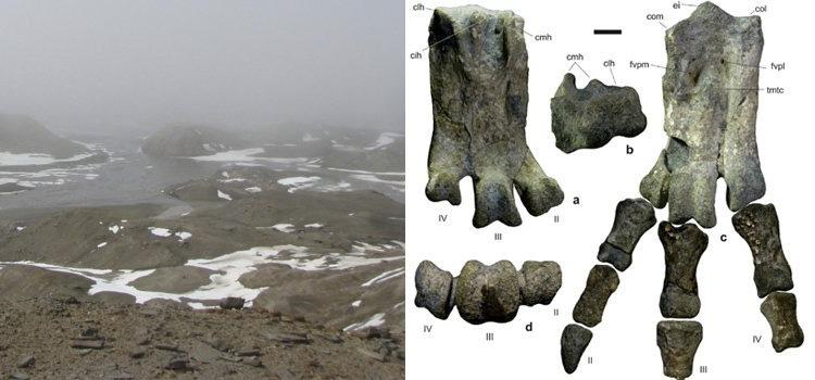 Hallaron restos de un pingüino gigante en la Antártida - Mendovoz